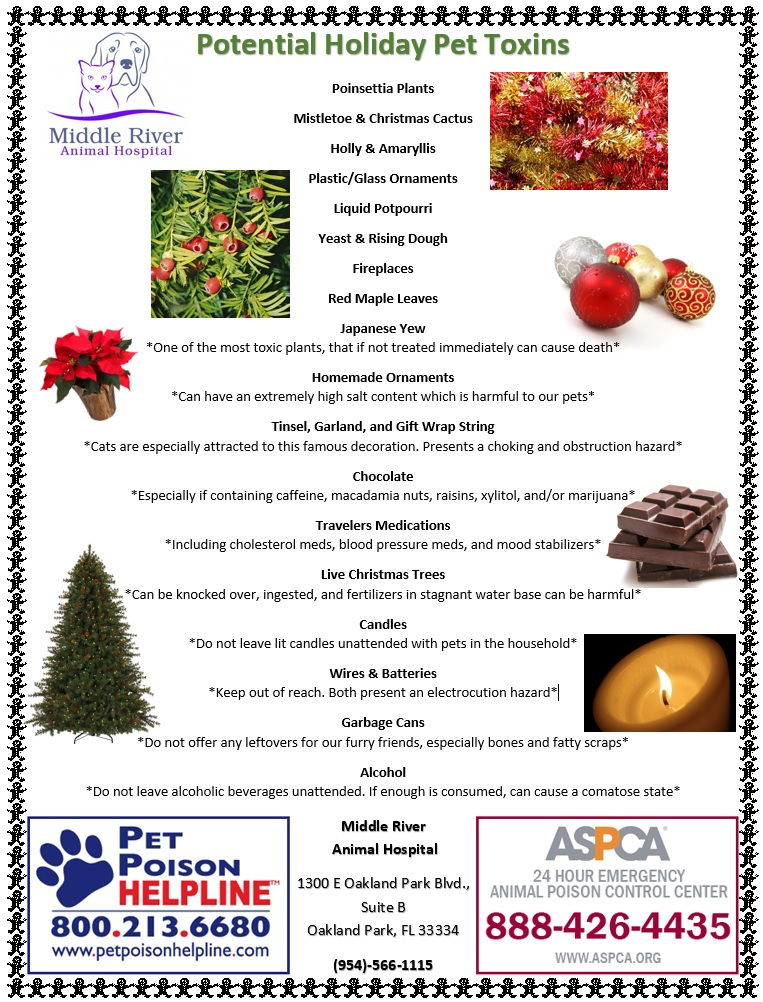 holiday-pet-toxins-img