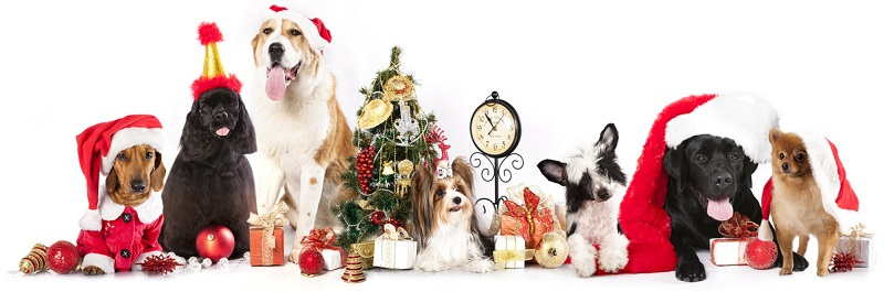 Holiday Pet Toxins - Middle River Animal Hospital