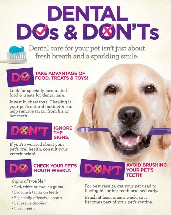 dental-dos-and-donts
